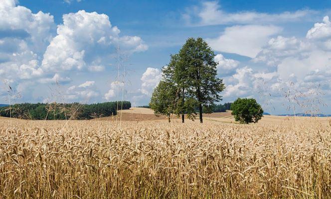 Польський уряд пропонує у зв'язку з посухою доплати