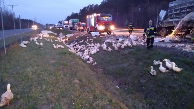 У Польщі перекинулась вантажівка з качками