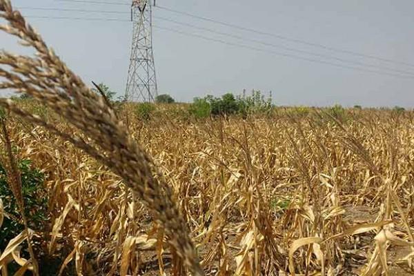 На Дніпропетровщині загадково гинуть фермери - ферми переписують на інших осіб