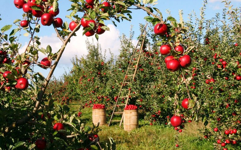 Польські аграрії скаржаться на брак українських заробітчан