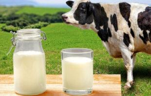 Українське молоко дорожче: порівняли ціни на продукти в Україні та Польщі