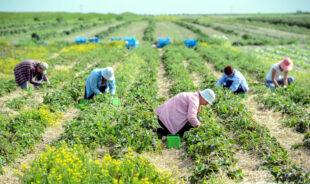 Більше 500 тисяч українських заробітчан платять податки в Польщі
