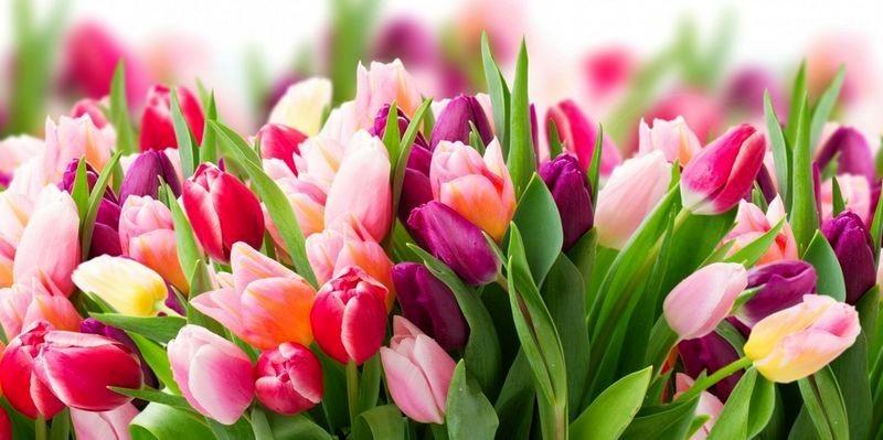 26 травня у Польщі відзначають День матері